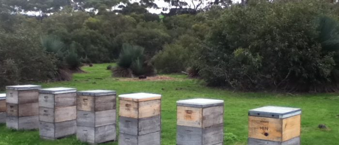 Kangaroo Island Living Honey